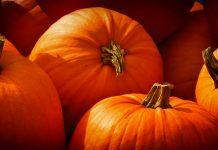 Leckere Speisen erwarten euch im Herbst